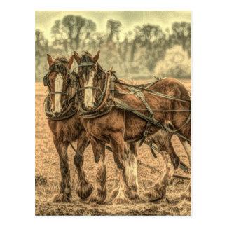 team of beautiful draft horses post cards