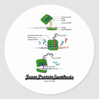 Team Protein Synthesis Classic Round Sticker