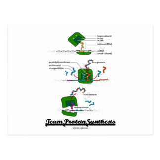 Team Protein Synthesis Postcard