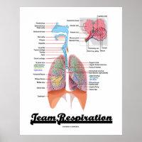Team Respiration (Respiratory System) Poster