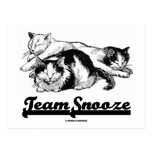 Team Snooze (Three Sleeping Snuggling Cats) Postcard