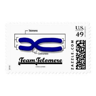 Team Telomere (Biology Humor) Postage