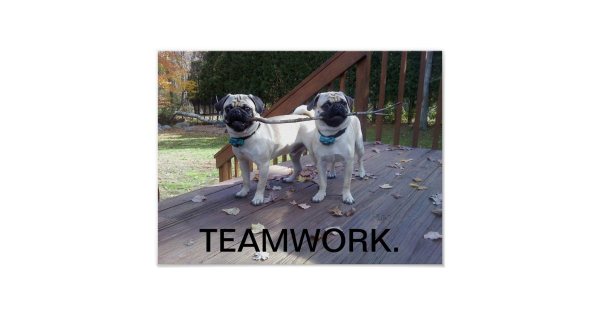 Teamwork Poster! Pugs working together! Poster | Zazzle.com