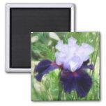 Teamwork - Tall Bearded Iris Magnets