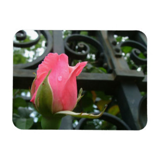 Tears of a rose rectangular photo magnet