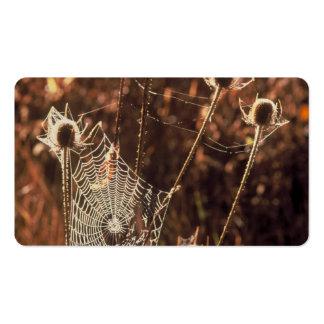 Teasel Business Card Template
