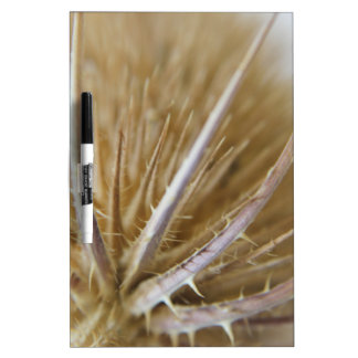 teasel nature photograph dry erase board