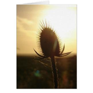 Teasel Sunset Card