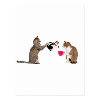 Teatime for kitty cats post cards