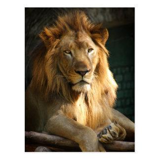 TecBoy.net Postcard - Lion (Vertical)