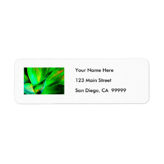 Technicolor Succulent Return Address Label