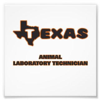 Técnico de laboratorio animal de Tejas Impresión Fotográfica