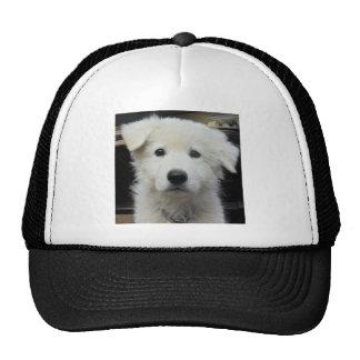 teddy_002.jpg mesh hats