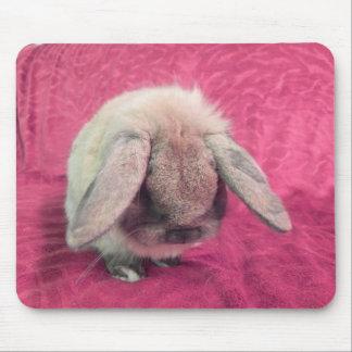 Teddy Bear Bunny Rabbit  - Rescue Rabbit Mouse Pad