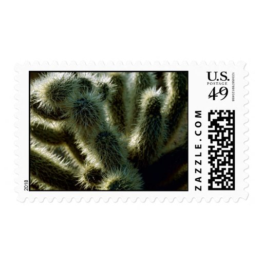 Teddy bear cholla cactus stamps