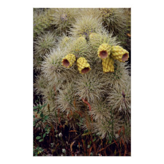 Teddy Bear Cholla Fruit flowers Print