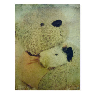 Teddy Bear Hugs A Guinea Pig Postcard