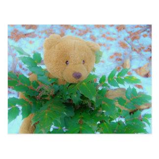 Teddy Bear in the Holly, blue sky Postcard