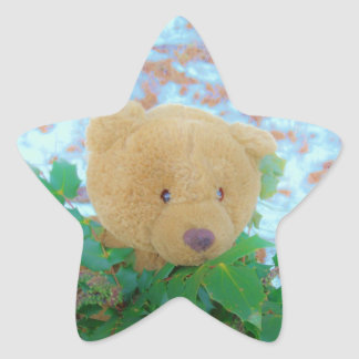 Teddy Bear in the Holly, blue sky Star Sticker