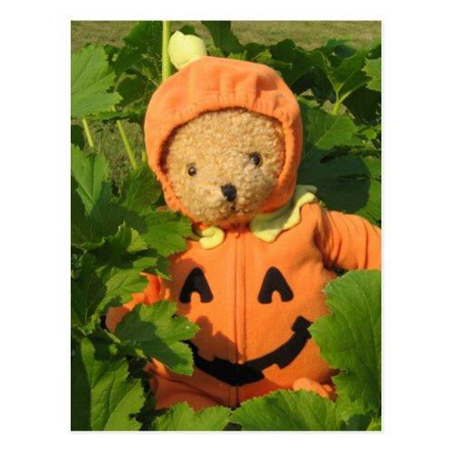 Teddy Bear in the Pumpkin Patch Postcard