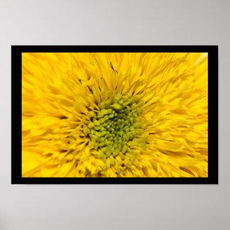 Teddy Bear Sunflower Blossom Poster