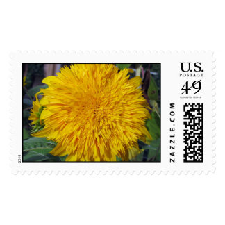 Teddy Bear Sunflower Postage Stamps