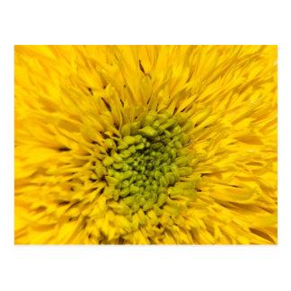 Teddy Bear Sunflower Postcard
