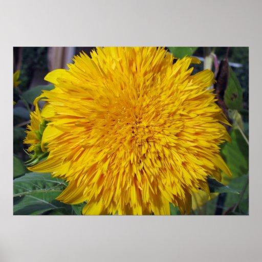 Teddy Bear Sunflower Poster