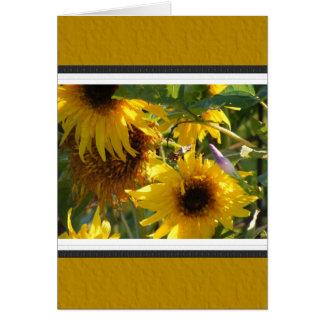 Teddy Bear Sunflowers: Kansas Card