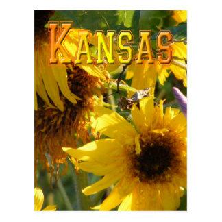 Teddy Bear Sunflowers: Kansas Postcard