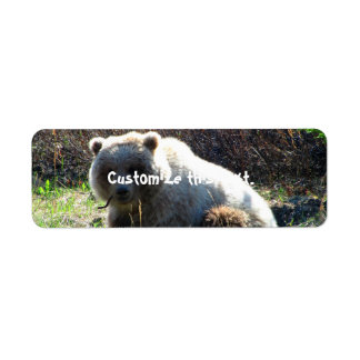 Teddy Bear's Picnic Label