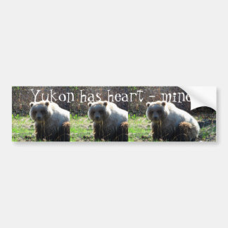 Teddy Bear's Picnic; Yukon Territory Souvenir Bumper Sticker