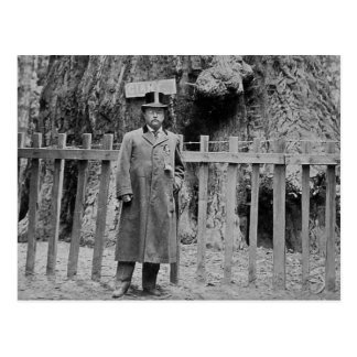 Teddy Roosevelt at the Big Tree Grove Santa Cruz Postcards