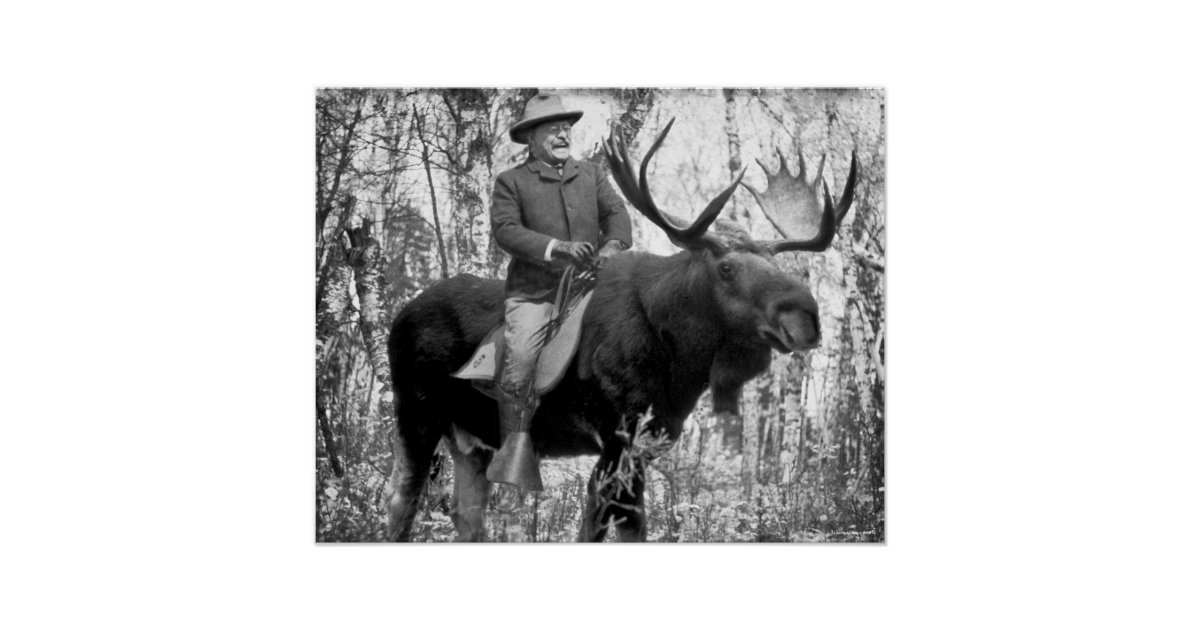 Teddy Roosevelt Riding A Bull Moose Poster Zazzle Com