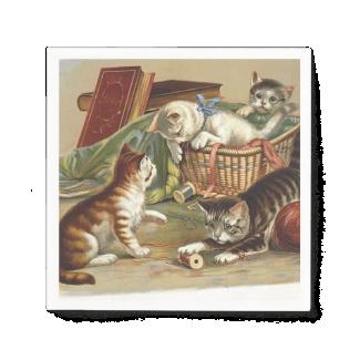TEE Curious Cat Standard Cocktail Napkin