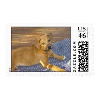Tee Postage Stamp
