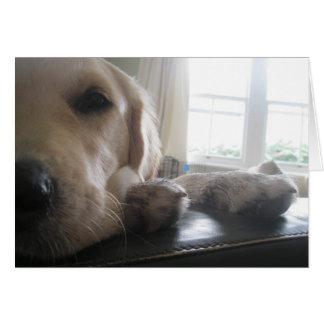 Teenage Golden retriever puppy   with attitude! Card