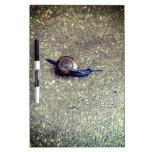Teeny Snail Dry-Erase Whiteboard
