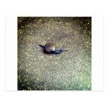 Teeny Snail Post Card