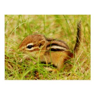 Teeny Tiny Baby Chipmunk Post Card