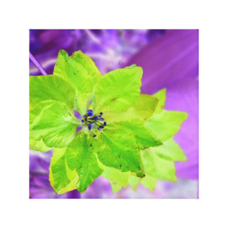 Teeny Weeny Glamour ~ Flower Power Ensemble Gallery Wrap Canvas