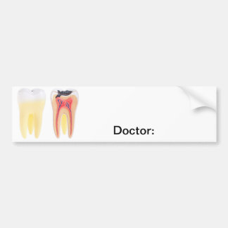 Teeth Anatomy Bumper Sticker