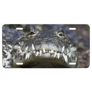 Teeth!! License Plate