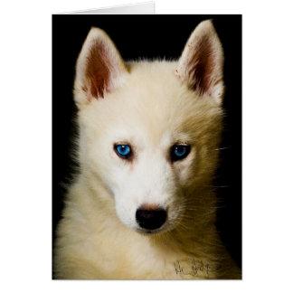 Tehya - husky siberiano tarjeta de felicitación