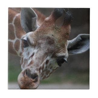 Teja adorable de la jirafa