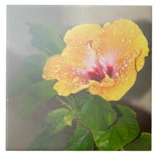 Teja amarilla de la flor del hibisco