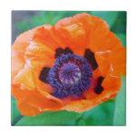 Teja anaranjada de la flor de la amapola
