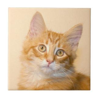 Teja anaranjada del gatito del tabby