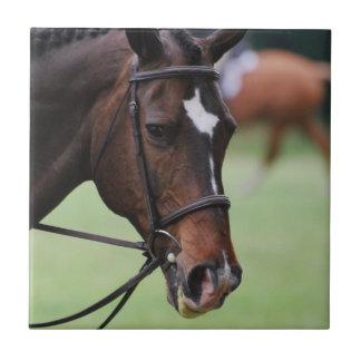 Teja árabe linda del caballo