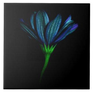 Teja azul de la flor